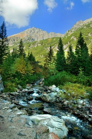 Mountains colorful landscape. Virgin forest in rocky mountains